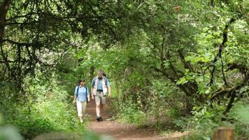 asiático maduro caminhando na trilha natural video