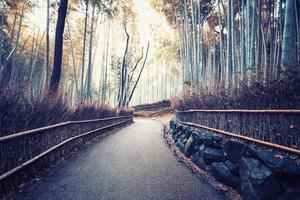 Arashiyama Bamboo Forest in Kyoto Japan photo
