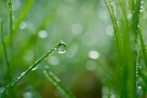 raindrop on the green grass in rainy days photo