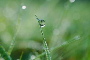 drops on the green grass leaves in spring season photo