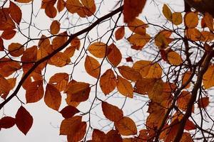 brown tree leaves in autumn season photo