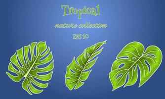 Tropical set with exotic carved palm leaves in cartoon style vector