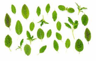 Flat lay fresh holy basil leaves isolate on white background photo