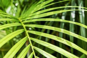 Palma amarilla o hojas tropicales verdes con fondo de luz solar foto