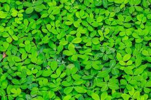 Leaf plant background photo