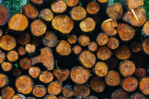 Cutting wood timber background photo
