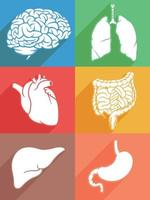 Silhouette Human Internal Organ Body Parts Stencil Icon Illustration vector