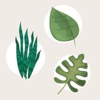 leaves plant botanical vector