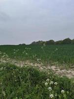 the sandy path photo