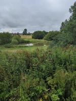 arbustos, árboles y un estanque. foto