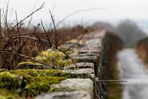 Wet Stone Wall photo