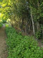 bushes along a gravel track photo