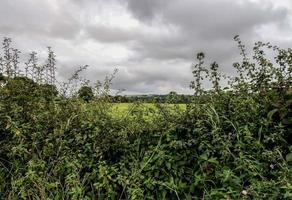 Hedgerow and Fields photo