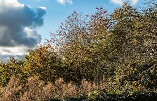 A Wooded Copse photo