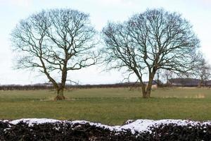 Two Trees in a Field photo