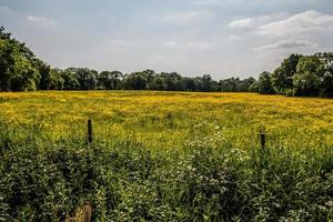 The Yellow Meadow photo