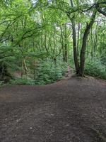 a woodland clearing photo