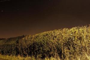 The Hedge at Night photo