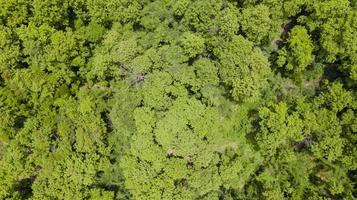 vista aérea del hermoso bosque tropical foto