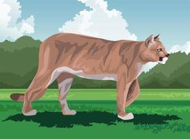 wild cougar feline in the field vector