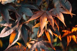 Fondo de colores con hojas otoñales naranjas foto