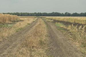 camino de campo hay una arboleda en el horizonte foto
