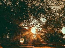 llamarada del sol a través de ramas arbusto árbol foto