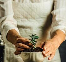 A woman in white holding a growing plant in a pot photo