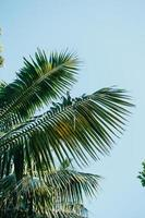 Palm tree leaves over a blue bright sky photo