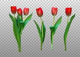 Realistic Vector Illustration Colorful Tulips Not Trace Pink Flowers on Light Background