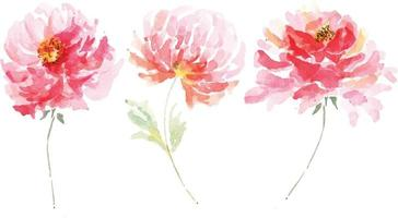 set of rose drawing with watercolor 4 vector