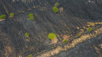 Aerial view over burning rice field after harvesting photo
