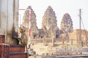 Macaco cangrejero comiendo fruta en lop buri, Tailandia foto