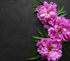 borde de flores de peonía sobre un fondo negro foto