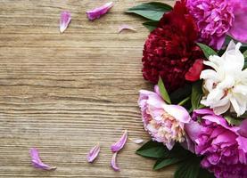 flores de peonía rosa como borde foto