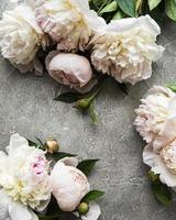 Peony flowers on a gray concrete background photo