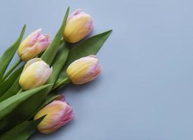 tulipanes de primavera sobre un fondo azul foto