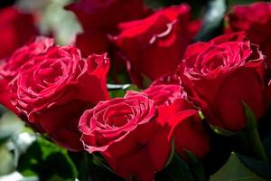 Arrangement of beautiful red rose bouquet photo