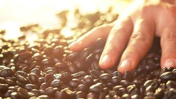 Closeup of hands touches the fresh roasted coffee beans on a bag rag surface video