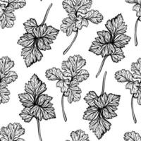 Parsley pattern. Aromatic spice, healthy herbs. Hand-drawn vector illustration
