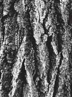 Grunge tree bark texture vector