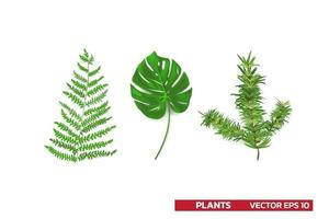 set of plant leaf from tropical forests monstera fern pine leaf isolated on white Can be used for greeting cards flyers invitations web design to everything vector