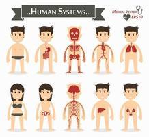 Human systems  gastrointestinal or digestive  skeletal  cardiovascular or circulatory  respiratory  gynecological  neurological  hepatobiliary  genitourinary   flat design vector