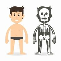 human body and skeletal system  flat design vector