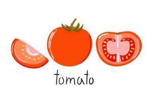 Hand drawn tomato half slice Modern flat illustration vector