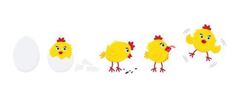 lindo, divertido, pequeño, polluelo, gallina, gallina, caricatura, plano, estilo, diseño, vector, ilustración, conjunto vector