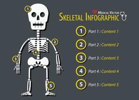 Skeletal Infographic  Flat design vector