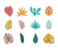 tropical leaf foliage exotic nature icon set flat design vector