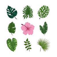tropical jungle foliage vector