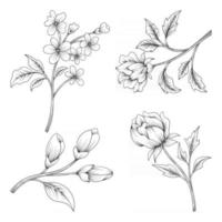 hand drawn beautiful herbs and wild flowers and leaves isolated on white background vector